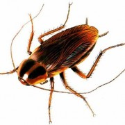 225856-cockroach_3