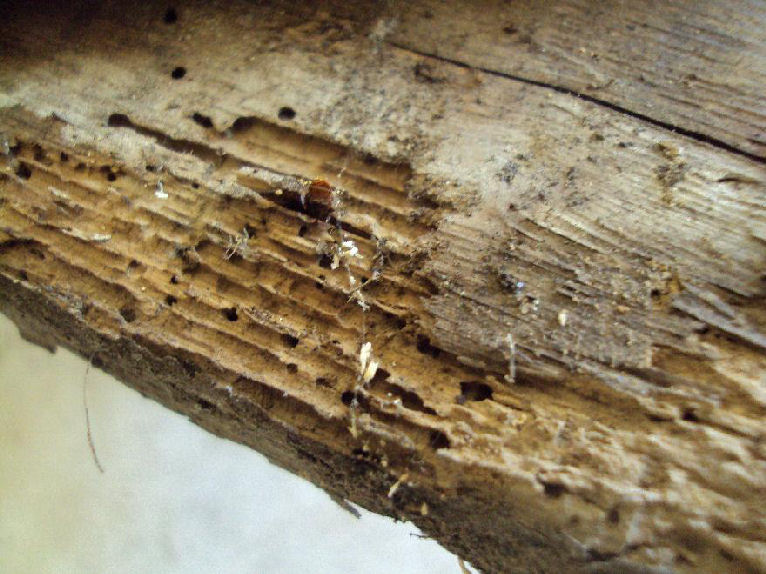 The Bed Bug Furniture Store Carpet Beetle Cat Food Bugs Prevent