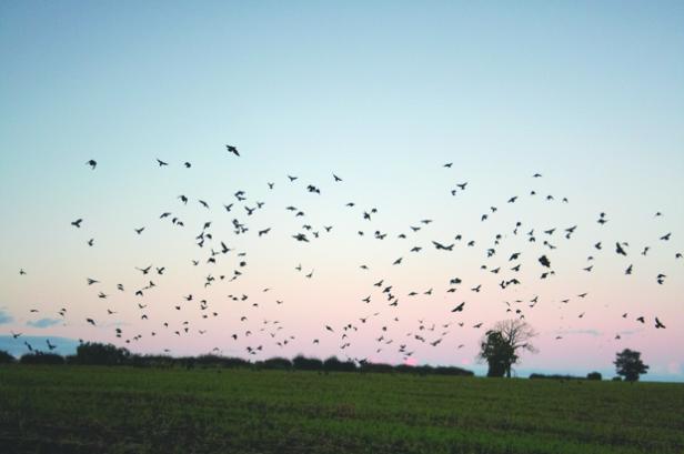 Birds Pigeons Pest Control Leeds Netting Spikes Pestserve