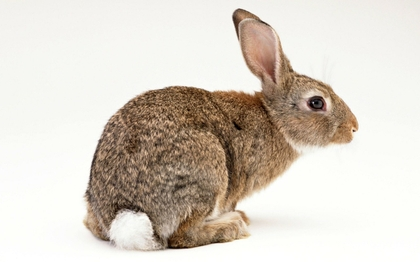Leeds Rabbit Pest Control Removal | Expert Support at ...