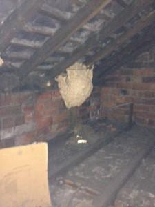 Wasp Nest Removal In Leeds Pest Control Leeds Pestserve